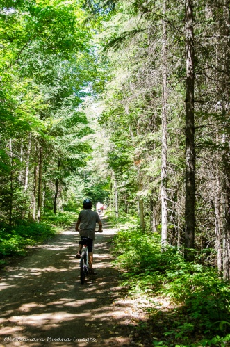 Old Railway bike trail in Algonquin
