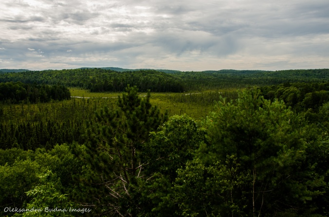 view from Algonquin visitor centre