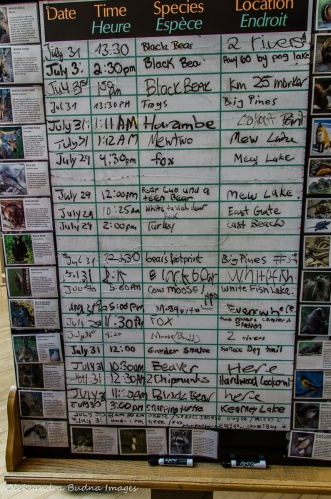 wildlife viewing board at Algonquin visitor centre