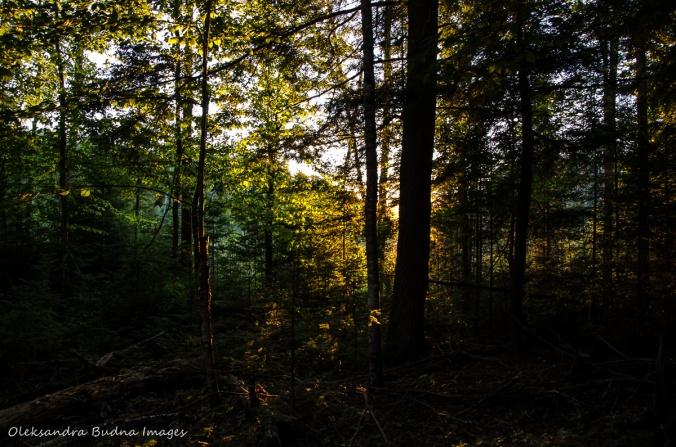 stting sun through the trees