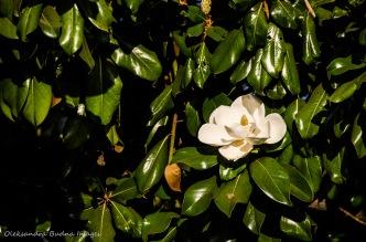 california plant