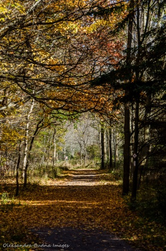 hiking at Dundas Valley Conservation Area in the fall