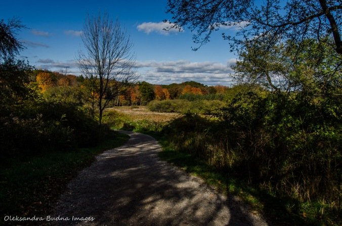 Dundas Valley Conservation Area in the fall
