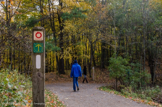 hiking the Main Loop at Dundas Valley