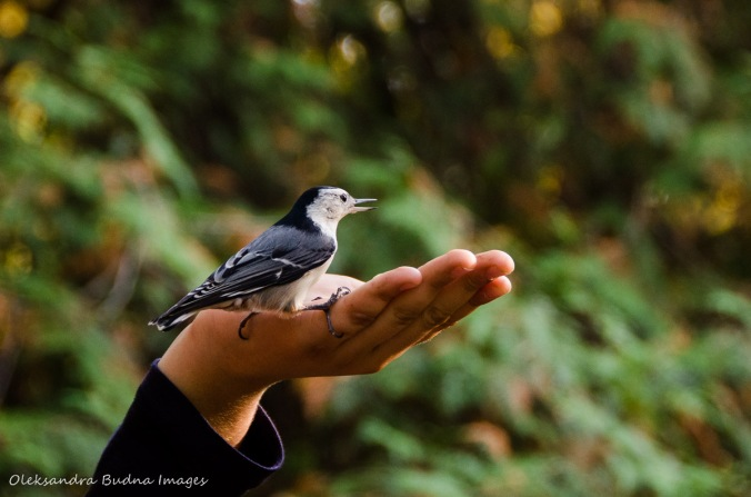 feeding birds at Hilton Falls
