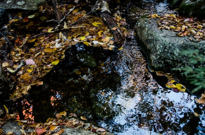 rocks, leaves and a pool of water