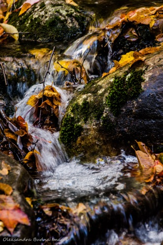 rocks and a water stream