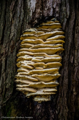 fungus on the tree