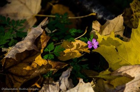 flower among fall leaves