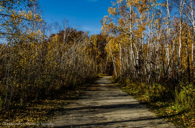 fall at Mount Nemo conservation area