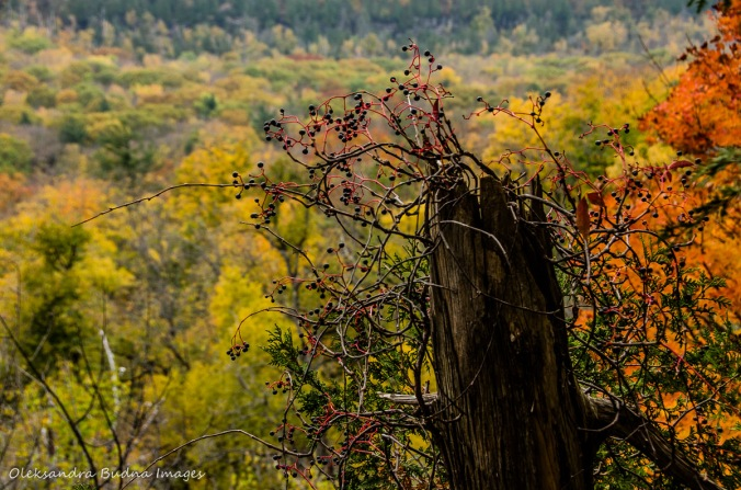 fall at Rattlesnake Point