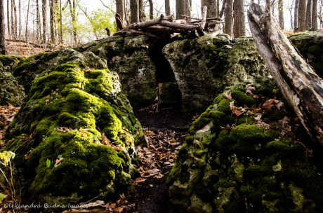 moss covered rocks at Eramosa Karst