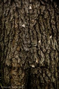 moths on a tree trunk