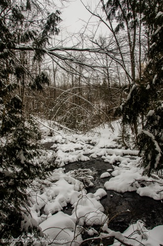 Black Creek at Limehouse Conservation Area