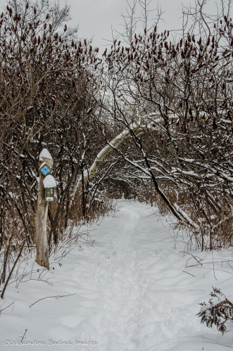 Bruce side trail in Limehouse Conservation Area