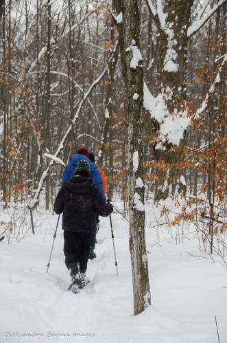 Bruce Trail at Limehouse Conservation Area