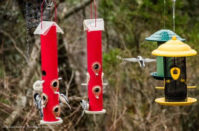 birdfeeders at Pinery