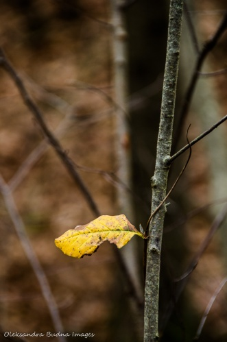 single yellow leaf on a branch