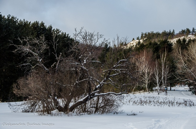 Gatineau Park in the winter