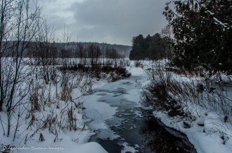 winter in Gatineau Park