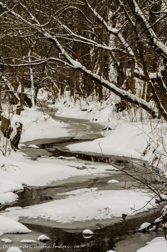 creek in the winter