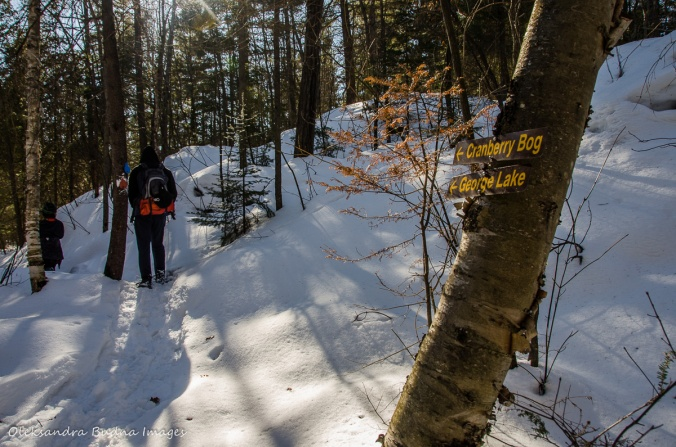 snowshoeing the Cranberry Bog Trail in Killarney in the winter