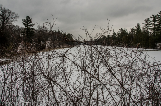 Old Ausable Channel at Pinery in the winter
