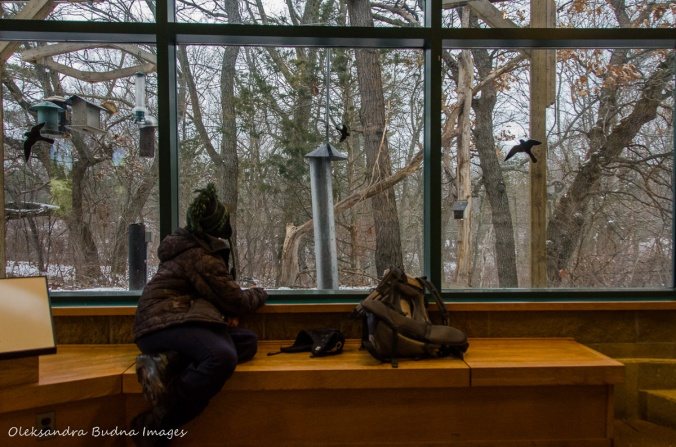watching birds at a visitor centre in Pinery