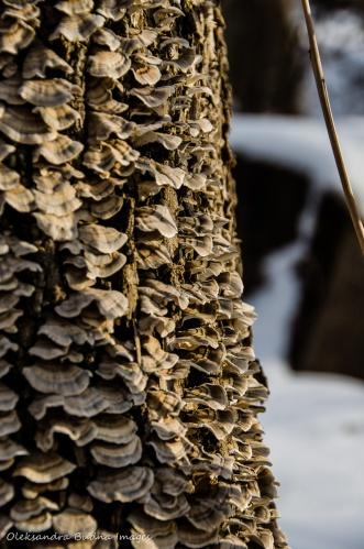 fungus on a strump