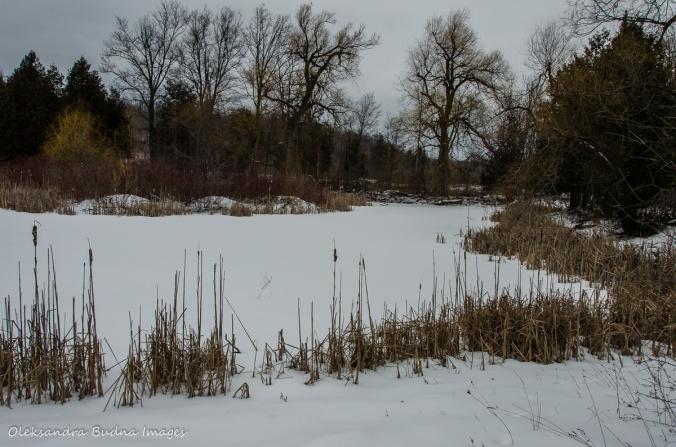 Terra Cotta CA in the winter