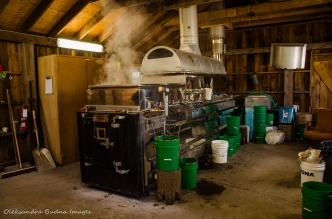 maple syrup production at Mountsber Conservation Area