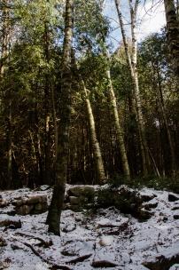 Lime kiln ruins at Mountsber Conservation Area
