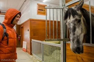 horse at Mountsber Conservation Area