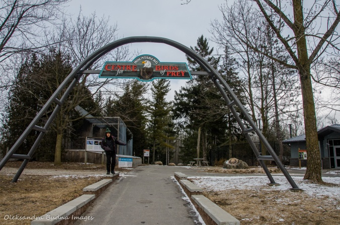 Raptor Centre at Mountsber Conservation Area