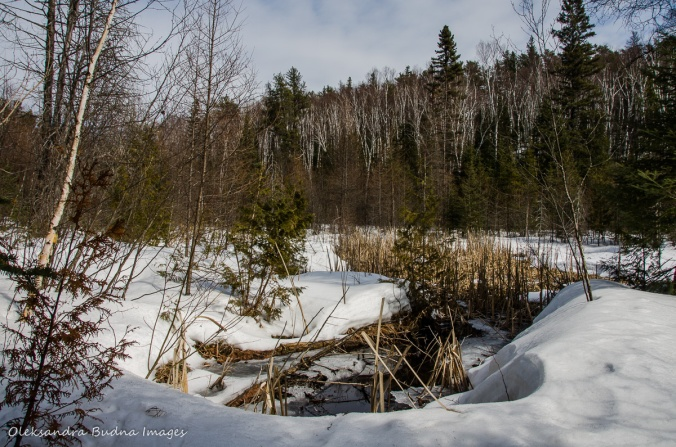 hiking Transition Trail at Windy Lake in the winter