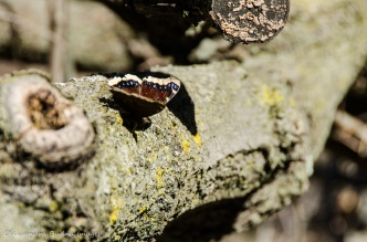 butterfly on a log