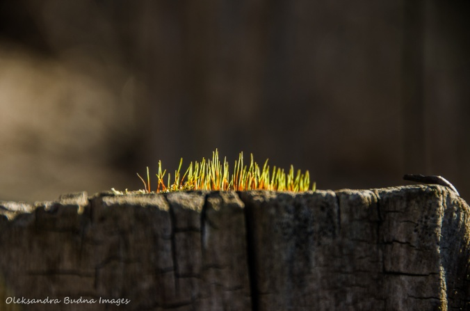 green sprouts on a tree stump