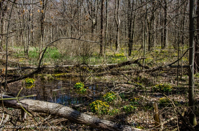 spring forest at Wheatley Provincial Park