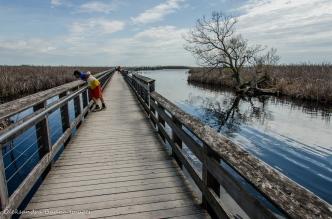 Marsh Boardwalk at Point Pelee National Park