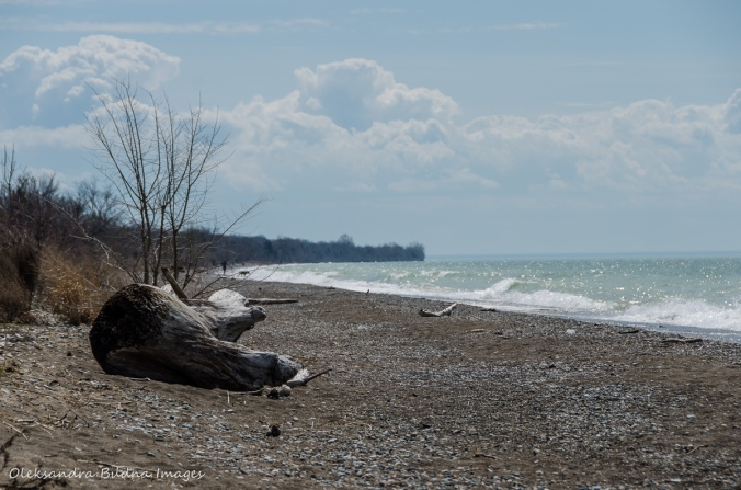 beach at Point Pelee