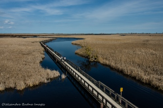 Marsh Boardwalk at Point Pelee National Park