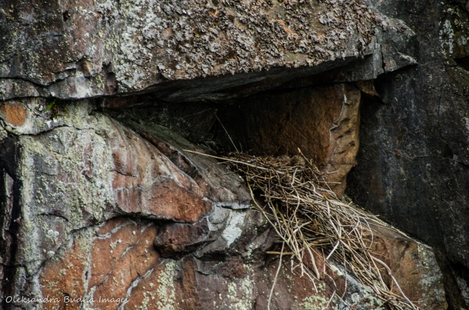 big bird nest on the cliff