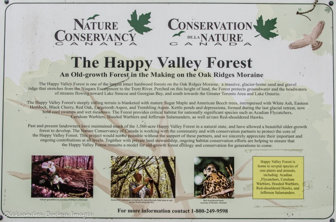 Happy Valley Forest information panel