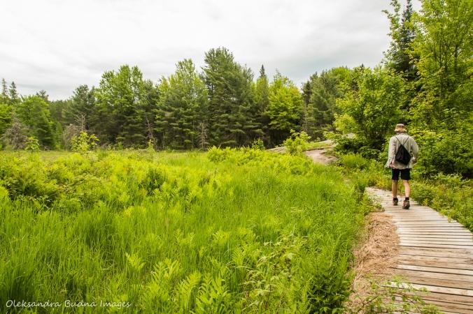 hiking Centennial Ridges in Algonquin