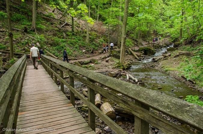 trail to Tiffany Falls