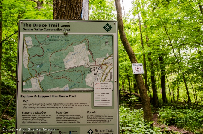 map of Bruce trail near Sherman Falls