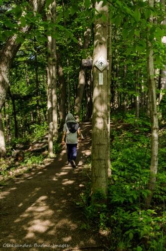 hiking Bruce Trail near Hamilton