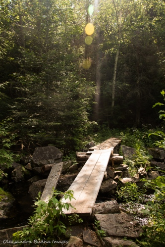 Highland Trail in Algonquin
