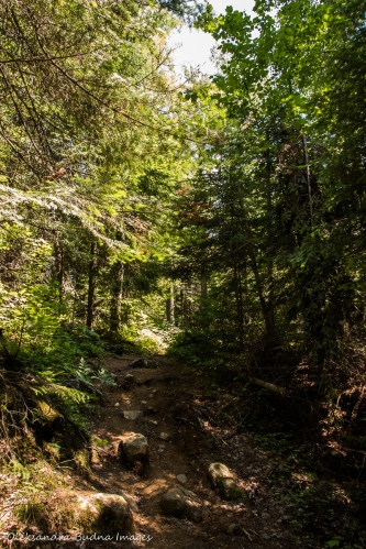 Highland Trail in Algonquin