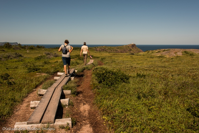 East Coast Trail near Cape Spear in Newfoundland